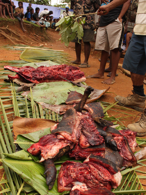 Distribution of pig wealth at a customary ceremony in Wautogik Village, East Sepik Province